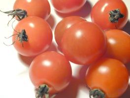 Fresh ripe red cherry tomatoes