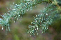 Rainy woodland